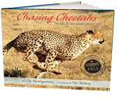 Chasing Cheetahs The Race To Save Africa S Fastest Cat