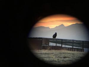 Condor Thru Scope photo Tianne Strombeck