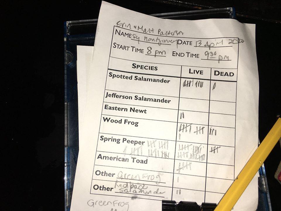Salamander-Scorecard